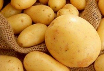 1 килограмы 40 теңге: Қазақстандық және қытайлық ғалымдар картоптың жаңа түрін ойлап тапты